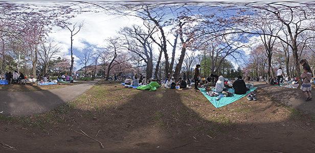 円山公園お花見