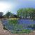 ムスカリの道 - 百合が原公園