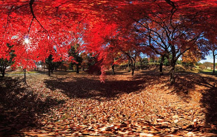 紅葉の昭和記念公園