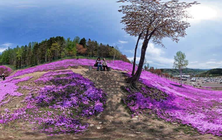 芝ざくら - 滝上公園